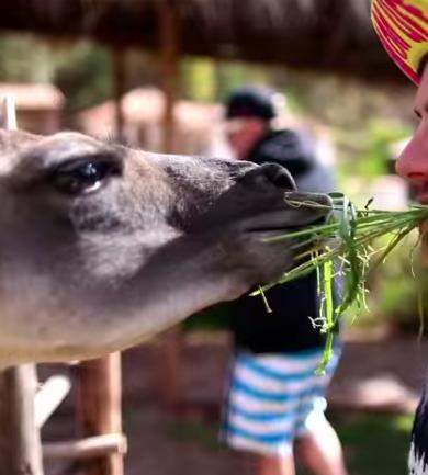 A 10 legjobb a 10 legjobb dolog videók közül