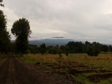 Gorillák közt a Virungában
