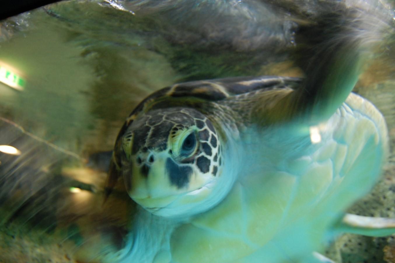 Bécs kezdőknek és haladóknak - - 7. rész: Tippek állatkedvelőknek és gyermekes családoknak