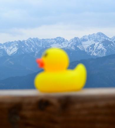 A kis kacsa története, aki tényleg elment Lengyelországba