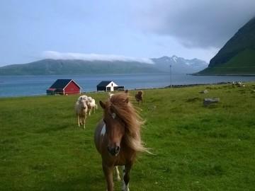 5 +1 dolog, ami hiányozni fog (és 5, ami nem) Tromsøből