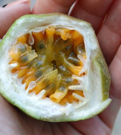 Trópusi gyümölcsfarmon Malajziában