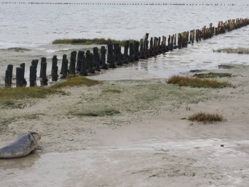 Watt-tenger, Fríz-szigetek és Fekete Nap - Dánia ritkán említett természeti kincsei