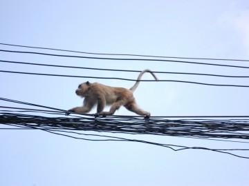 Thaiföld, a mosolyok országa – 4. rész - A majmok