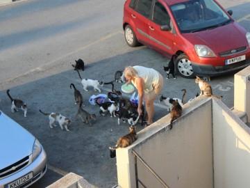 Macskáknak áll a világ
