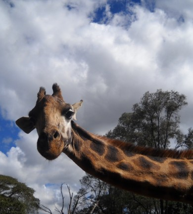 Afrikai szafari olcsón