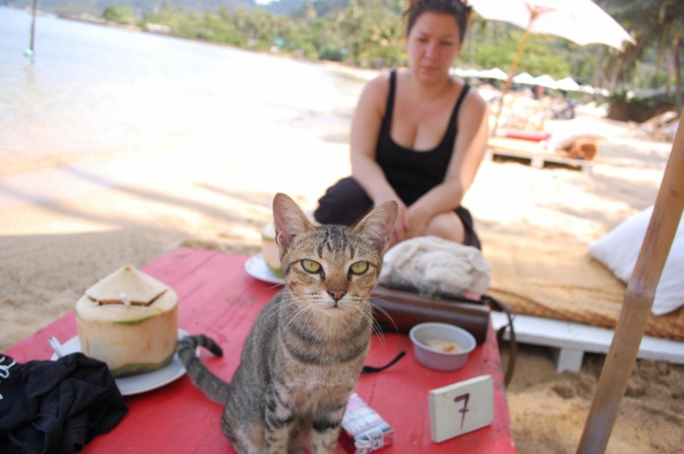 Thaiföld, a mosolyok országa – 8. rész - Kutyák és macskák